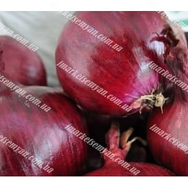 Ретано F1 семена лука репчатого среднего красного 250 000 семян Hazera