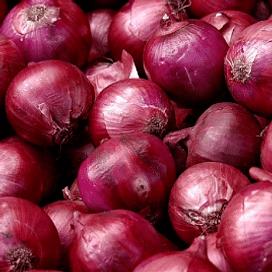 СВ 4593 F1 (SV 4593 F1) семена лука репчатого красного 250 000 семян Seminis/Семинис