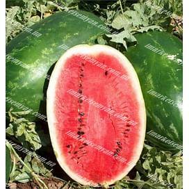 Эрли Саманта F1 семена арбуза тип Кримсон Свит раннего 1 000 семян United Genetics