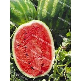 Карнаката F1 (Карнак F1) семена арбуза тип Кримсон Свит среднего United Genetics