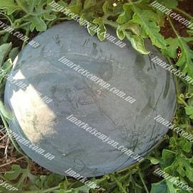 Донован F1 семена арбуза бессемянного тип Шуга Беби среднего 500 семян Hazera