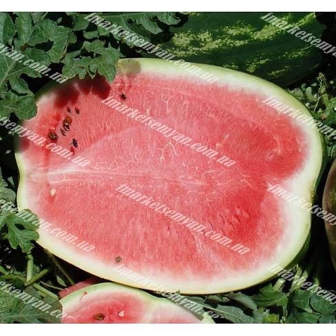 Мэдисон F1 семена арбуза тип Кримсон Свит среднераннего 1 000 семян (НЕ ТОВАРА) Clause/Клоз