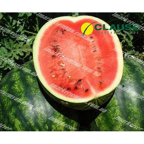 Катрин F1 семена арбуза тип Кримсон Свит ультрараннего 1 000 семян (НЕТ ТОВАРА) Clause/Клоз