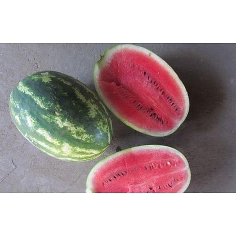 LS 1667 F1 семена арбуза раннего тип Кримсон Свит Lucky Seed