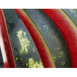 Мирсини F1 семена арбуза среднераннего Syngenta/Сингента