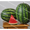 Мисон F1 (Эмир F1) семена арбуза Yuksel/Юксел