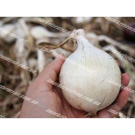 Вайт Меджик F1 (Уайт Мэджик) семена лука репчатого белого среднеспелого 200 семян United Genetics