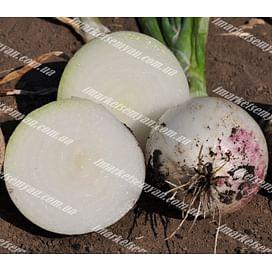 Примо Бланко F1 семена лука белого 250 000 семян LibraSeeds