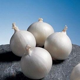 Солстис F1 семена лука репчатого раннего 100 000 семян Nunhems