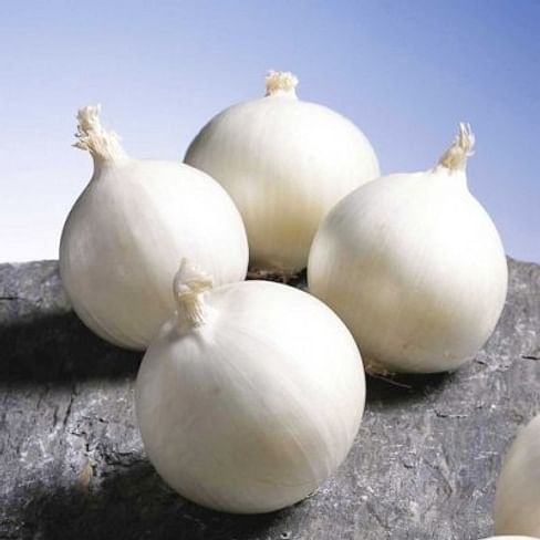 Глэдстоун семена лука белого раннего 250 000 семян Bejo/Бейо