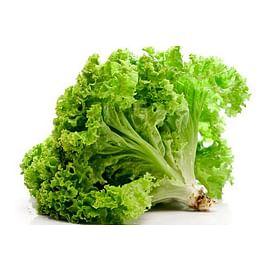 Салат: выращивание, уход, защита