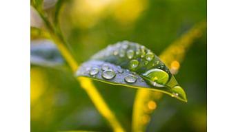Прилипатель для растений. Зачем нужны прилипатели и адъюванты?