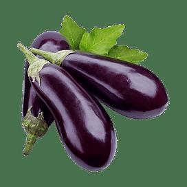 Баклажан: выращивание, уход, защита