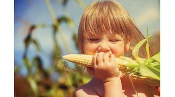Лучшие сорта и гибриды сахарной кукурузы в Украине