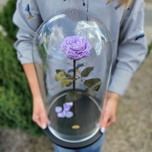 Роза в колбе ROYAL лаванда