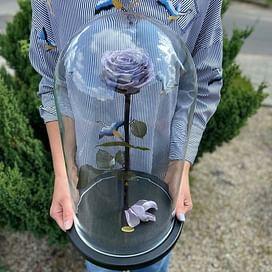 Роза в колбе ROYAL пыльная