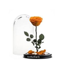 Роза в колбе оранжевая