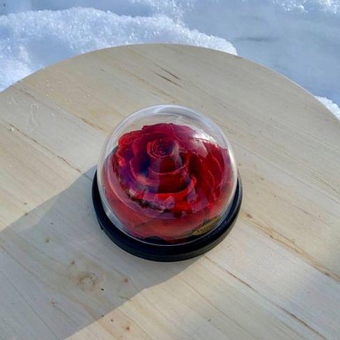 Бутон розы под куполом d12