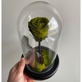 Роза в колбе зеленая (Mini)