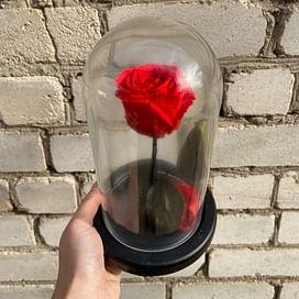 Роза в колбе красная (Mini)