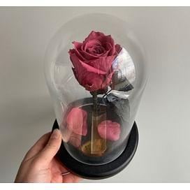 """Роза в колбе """"Фламинго"""" (Mini)"""