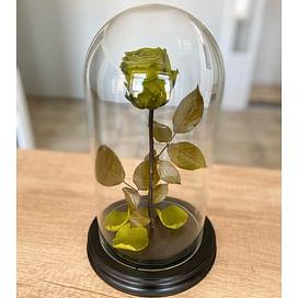 Роза в колбе оливковая (Standart)