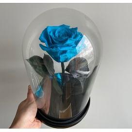 Роза в колбе голубая (Standart+)