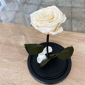 Роза в колбе белая (Premium)