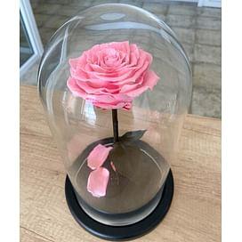 Роза в колбе розовая (Premium)