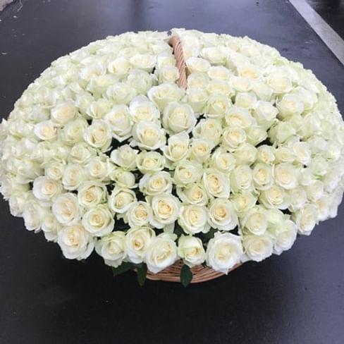 Корзина белых роз 201 роза