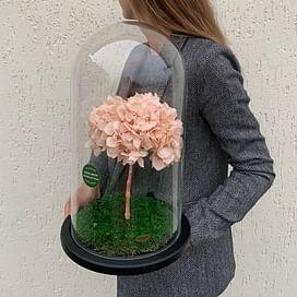 Бонсай (гортензия) розовый