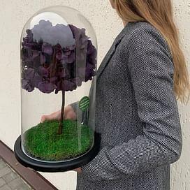 Бонсай (гортензия) фиолет