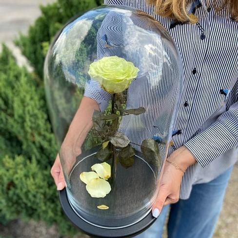 Роза в колбе ROYAL салатовая