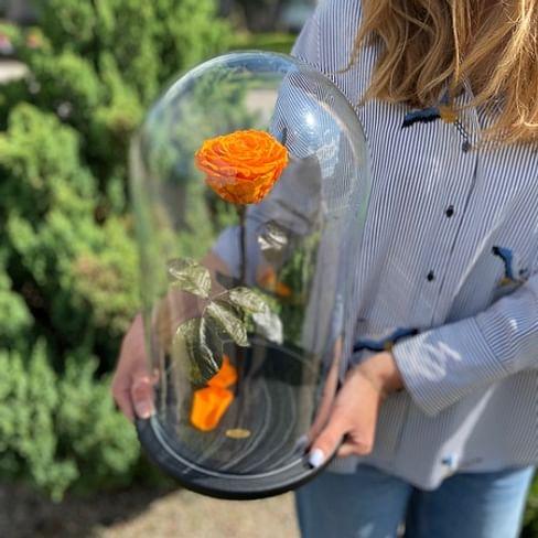 Роза в колбе ROYAL оранжевая