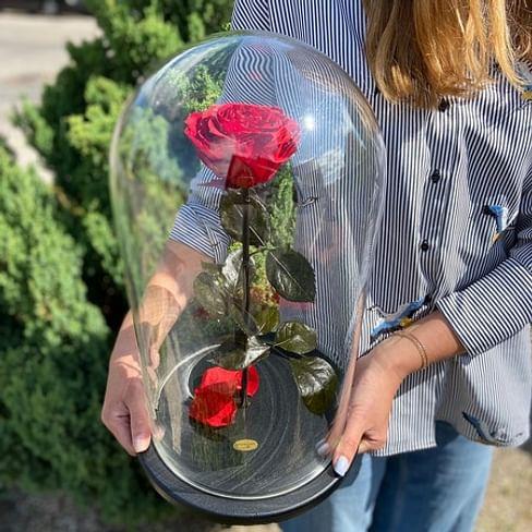 Роза в колбе ROYAL красная