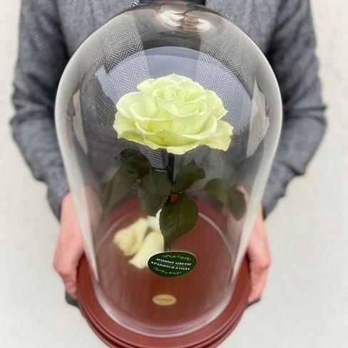 Роза в колбе VIP салатовая
