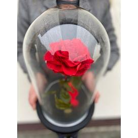 Роза в колбе VIP красная