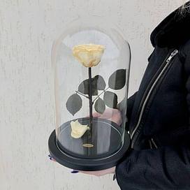 Роза в колбе Premium кремовая