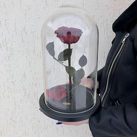 Роза в колбе Premium бордо
