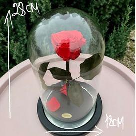 Роза в колбе Premium красная