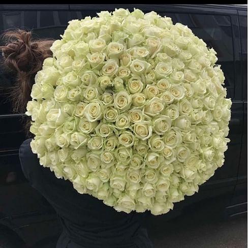 151 Белая роза 60см