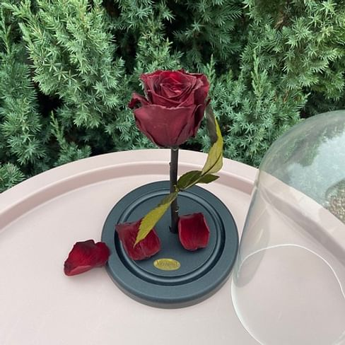 Роза в колбе бордо Standart
