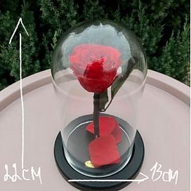 Роза в колбе красная Standart