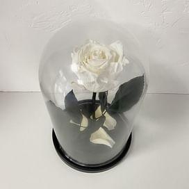 Роза в колбе белая (Standart+)