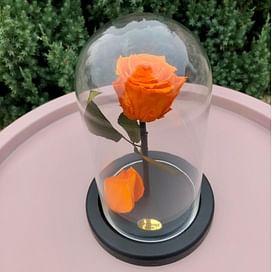 Роза в колбе оранжевая Standart