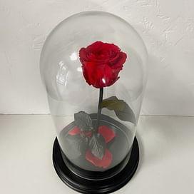 Роза в колбе красная (Standart+)