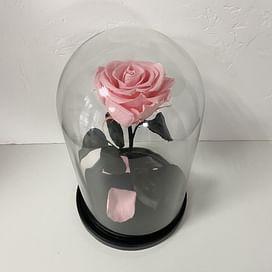 Роза в колбе розовая (Standart+)