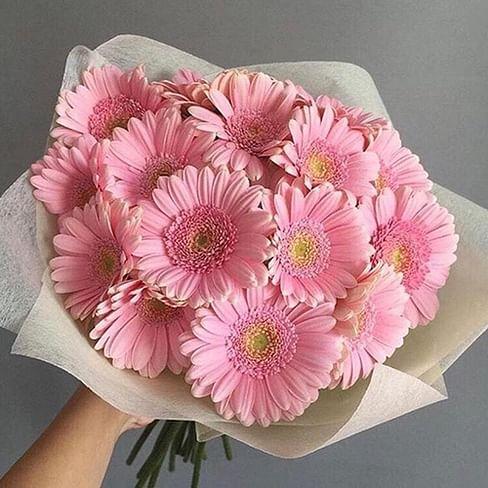 Букет из 15 розовых гербер мини