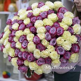 """Букет роз """"Сиреневые и белые"""" 101 роза Эквадорская роза"""