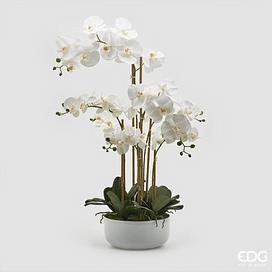 Орхидея EDG Enzo De Gasperi Арт.214906,10
